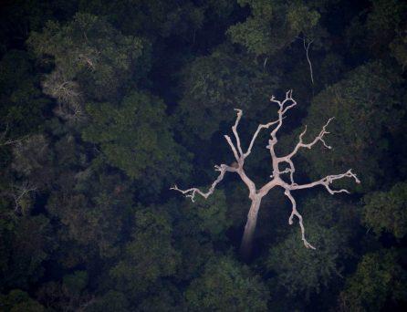 全世界20%的氧氣來自亞馬遜?先來聽聽專家怎麼說