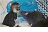 可愛直擊:小貓咪的老鼠保母