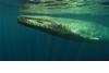 101動物教室:藍鯨大揭密!