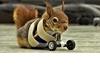 截肢小松鼠穿上特製「輪椅」後依然活潑亂跳!