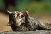 為什麼貓狗的「吻」能致命?