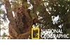 罕見畫面:花豹同類相食