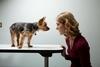 焦慮的主人會養出焦慮的狗狗嗎?