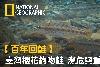 【百年回鮭】臺灣櫻花鉤吻鮭 瀕危與重生