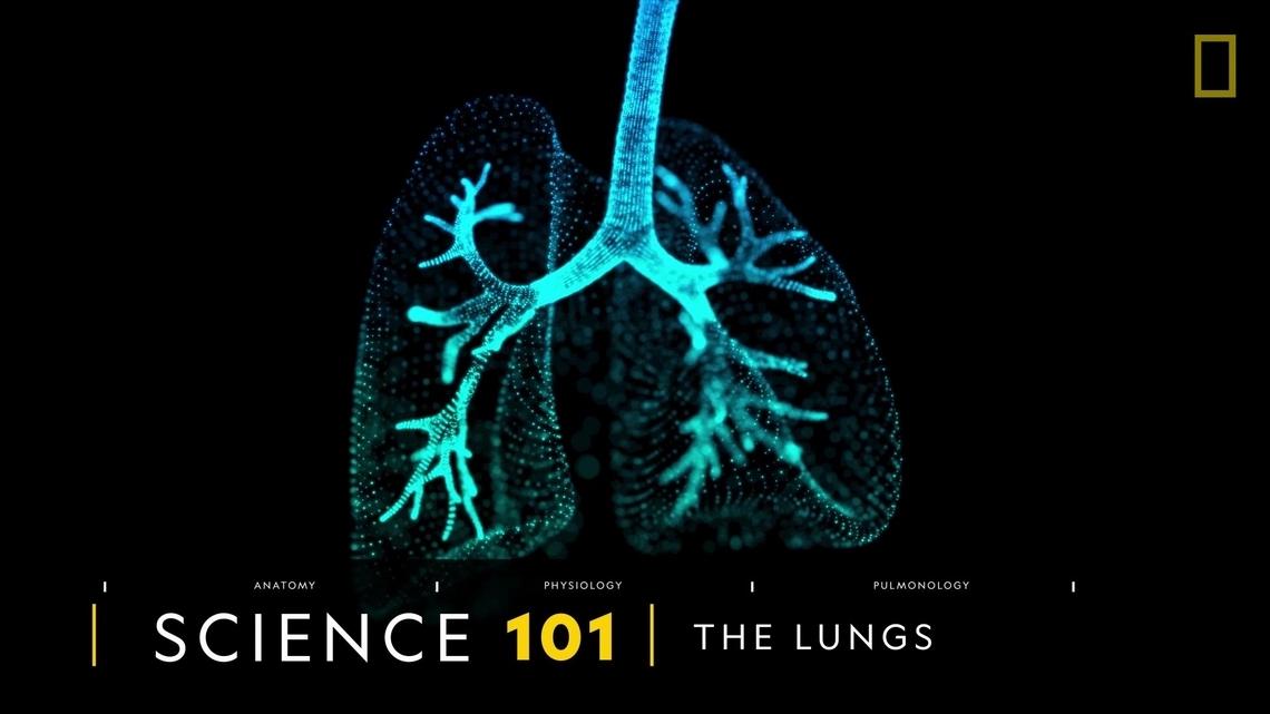 101科學教室:肺臟