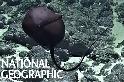 科學家好興奮!他們到底在海底發現了什麼?