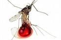 對抗蚊子的戰役