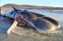 海洋動物為什麼吃塑膠?