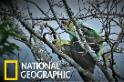 增產報「種」!稀有鸚鵡交配過程首次曝光