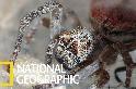 群居性蜘蛛與牠們的「噬母」習性