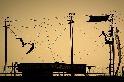 紐約的空中飛人訓練學校