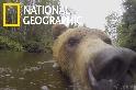 超近!好像能感受到灰熊溼溼的的鼻子呢!