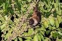 臺灣狐蝠再現!曾以為絕跡本島 重磅調查確認花蓮市就有