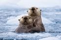 融化冰塊的溫暖擁抱
