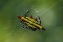 酷知識測驗:蜘蛛「蜘」多少?