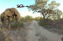 360度臨場體驗:看公園導遊如何跟小屁象說教