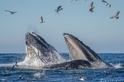 研究:加倍保育工作 全球海洋有機會在30年內重現往日榮景