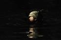 水中生存訓練