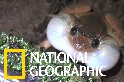 就你最特別!孟買夜蛙的獨特「抱接」體位