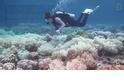 大堡礁消亡速度可能比預期快