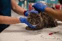 關於愛貓與COVID-19,你應該要知道的事