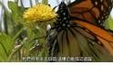 探險直擊:那些年,我們一起追的蝴蝶