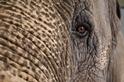動物照鏡子 看見了什麼?