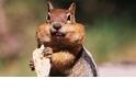 【動物好朋友】花栗鼠(Chipmunk)