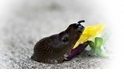 酷知識測驗:黏呼呼的蛞蝓與蚯蚓知識