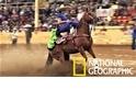 墨西哥傳統馬術比賽,考驗馬匹「緊急煞車」能力?
