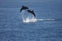 從媽祖的順風耳 傾聽太平洋的鯨豚生態韻律