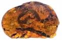 「琥珀藏蛇!」古生物學家首度在琥珀中發現幼蛇化石
