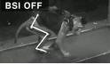 科學突破:讓癱瘓的猴子重新行走!