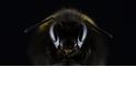 酷知識測驗:嗡嗡嗡~ 「蜂」狂是非題!