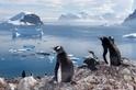 陸上笨拙、水中蛟龍:企鵝