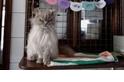 歡迎來到貓船,全世界唯一的漂浮式貓咪避難所