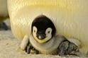 酷知識測驗:南極洲篇