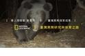 臺灣黑熊研究與保育之路-保育成果