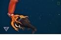 揭開神秘的深海生態系統