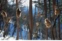 《國家地理終極旅遊:全球57大最美國家公園》-地獄谷野猿公苑
