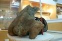 台灣的鯨魚化石告訴了我們什麼?(下)