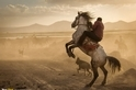卡帕多奇亞的野馬