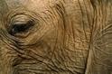 為甚麼大象和其他動物滿臉皺紋?