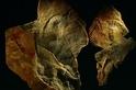 這團神祕的東西,是地球上最古老的動物之一