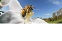 蜘蛛毒,救蜜蜂!