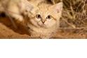 你家的貓是左撇子還是右撇子?來看看怎麼分辨