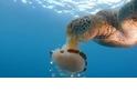 水母是綠蠵龜的辣味米粉