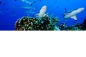 聯合國將啟動公海保育公約談判