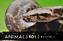 101動物教室:蟒蛇大解密!