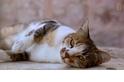 貓貓咪啊!耶路撒冷的野貓與牠們的守護者